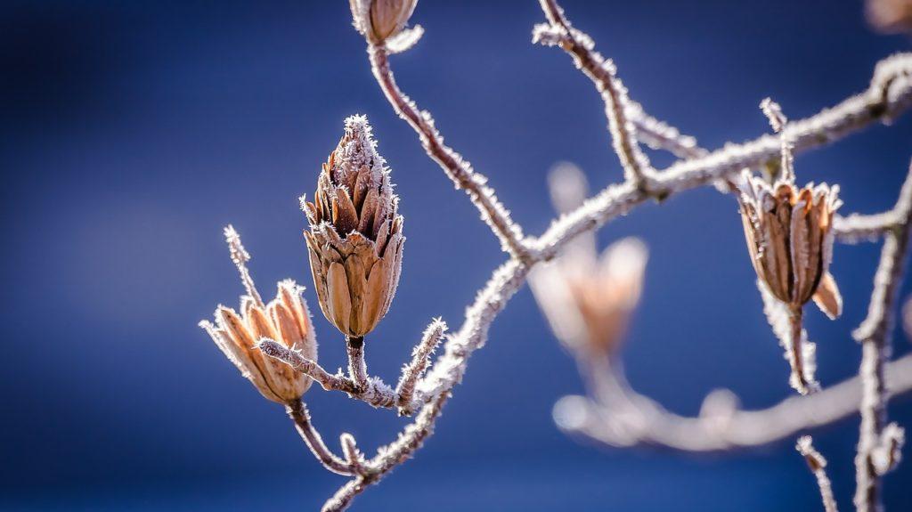 ある冬の日のぎっくり腰